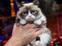 Кот-мем отсудил $700 тыс. за нарушение авторских прав