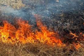 Пять-гектаров-травы-сгорело-в-Кызылжарском-районе