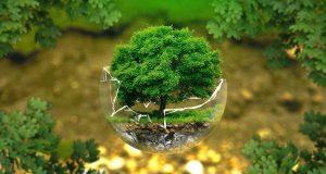 Экологи-отпраздновали-профессиональный-праздник-субботником