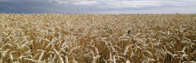 В-СКО-запустили-новый-зерносушильный-комплекс
