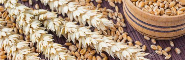 Закупочные-цены-на-пшеницу-озвучили-в-РК