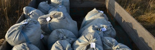 Четверо-североказахстанцев-украли-больше-тонны-рачков-артемия-салина-в-Мамлютском-районе