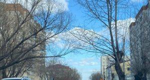 Аварийные-деревья-угрожают-жизням-петропавловцев