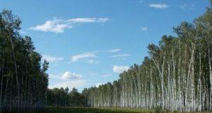 Североказахстанцам-запретили-ходить-в-лес-в-пожароопасный-период